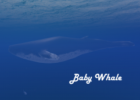 baby_whale